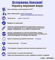 Вирусы Коксаки уже в Украине