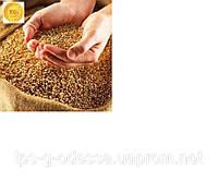 Прямой метод обеззараживания зерновых