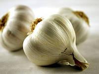 Мифы и реальности выращивания чеснока
