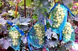 Мешки от ос на виноград 2 кг, 22*30 см зелён (сетка-мешок). От Ос, мошек,птиц и др. насекомых!!!