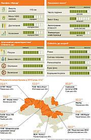 Семена Рожь озимая Гуттино KWS Германия/ Жито озиме Гуттіно