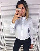 Рубашка женская белая и голубая