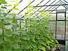 Фермерские теплицы, фото 7