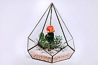 Флорариум геометрическая форма Промінь весни