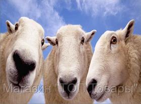 Ножницы для стрижки овец!Акция, фото 3