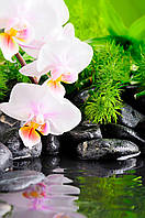 Фотопанно  Орхидея спа. Печать на керамической плитке, размер плитки 20х30см.