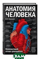 Боянович Юрий Владимирович Анатомия человека. Компактный атлас-раскраска