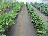 Агроволокно Greentex p-50 (1.6x10м) чёрное, фото 2