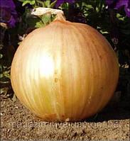 Екстра Ерлі Голд F1 насіння цибулі озимої ранньої 240 днів United Genetics 10 000 насінин