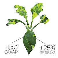САХАРНАЯ СВЕКЛА биоТехнология выращивания на 1ГА