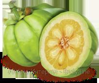 Diet Gum жвачка с гарцинией камбоджийской