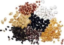 Семена весовые