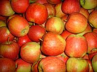 Яблоки Чемпион, высший сорт 1 кг,  оптом
