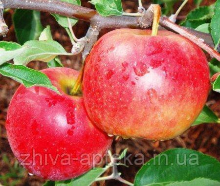 Яблоки Декоста, высший сорт 1 кг,  оптом