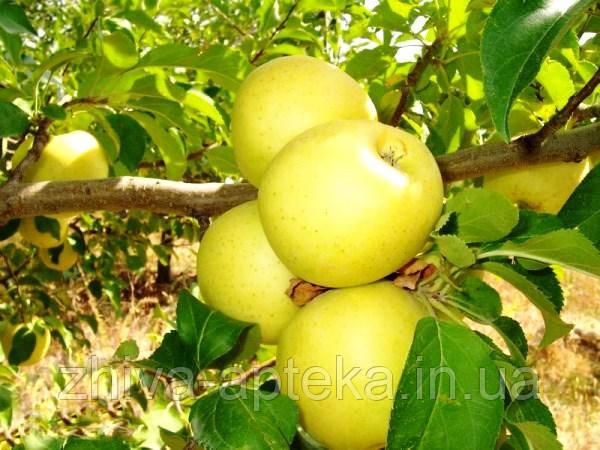 Яблоки Голден Делишес, высший сорт 1 кг,  оптом