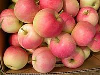 Яблоки Гала, высший сорт 1 кг,  оптом