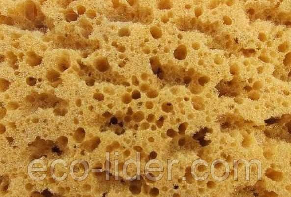 Коралловая губка