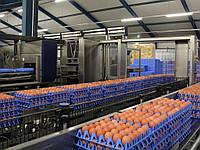 Лотки для яиц Jumbo (65-75 грамм), фото 1