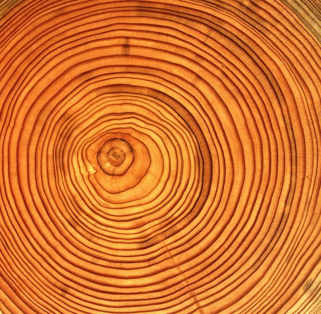 Настоящее дерево в мультирамках Руноко