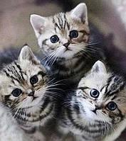 Набор алмазной вышивки Три маленьких котеночка 35 х 40 см (арт. FR607)