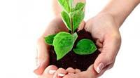 Средства защиты и удобрения для растений