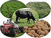 Производство сельхозпродукции падает