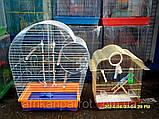 Клетка для попугая цинк Патриот 56х31х69, фото 6