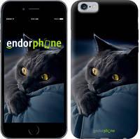 "Чехол на iPhone 6 Дымчатый кот ""825c-45-532"""