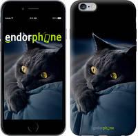 "Чехол на iPhone 6 Plus Дымчатый кот ""825c-48-532"""