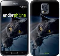 """Чехол на Samsung Galaxy S5 g900h Дымчатый кот """"825c-24-532"""""""
