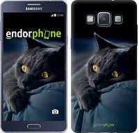 "Чехол на Samsung Galaxy A5 A500H Дымчатый кот ""825c-73-532"""