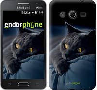 """Чехол на Samsung Galaxy Core 2 G355 Дымчатый кот """"825c-75-532"""""""