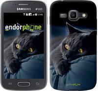 """Чехол на Samsung Galaxy Ace 3 Duos s7272 Дымчатый кот """"825c-33-532"""""""