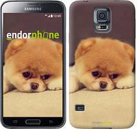 """Чехол на Samsung Galaxy S5 g900h Boo 2 """"890c-24-532"""""""
