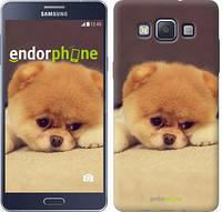 """Чехол на Samsung Galaxy A5 A500H Boo 2 """"890c-73-532"""""""