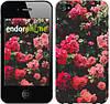 """Чехол на iPhone 4 Куст с розами """"2729c-15-532"""""""
