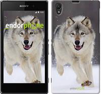 "Чехол на Sony Xperia Z1 C6902 Бегущий волк ""826c-38-532"""