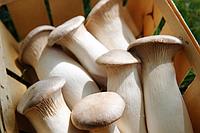 Блок белый степной гриб