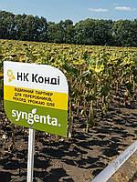 Семена подсолнечника Сингента НК Конди (конди сингента)