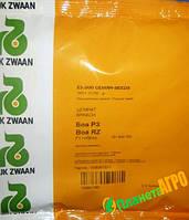 Семена шпината Боа F1, 25000 шт, RZ (Рийк Цваан), Голландия