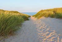 Фотообои бумажные на стену 368х254 см 8 листов: Песчаная тропинка. Komar 8-995