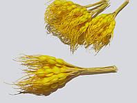 Колоски желтые
