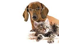 Товари для тварин