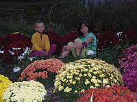 Дети-цветы нашей жизни