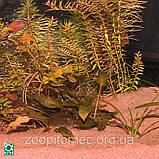 Грунт JBL Sansibar RED декоративный мелкий, красный 10 кг, фото 2