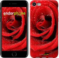 "Чехол на iPhone 7 Красная роза ""529c-336-6129"""