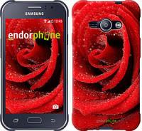 "Чехол на Samsung Galaxy J1 Ace J110H Красная роза ""529c-215-6129"""