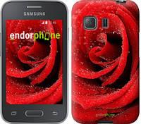 "Чехол на Samsung Galaxy Young 2 G130h Красная роза ""529u-206"""
