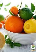 Эксклюзив! Серия уроков «Выращиваем мандарин, лимон да апельсин и больше не ходим в магазин», 6 урок