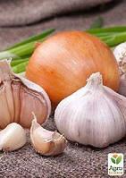 Эксклюзив! Серия уроков «Выращиваем особенный лук и чеснок с обычного посевного материала», 6 уроков